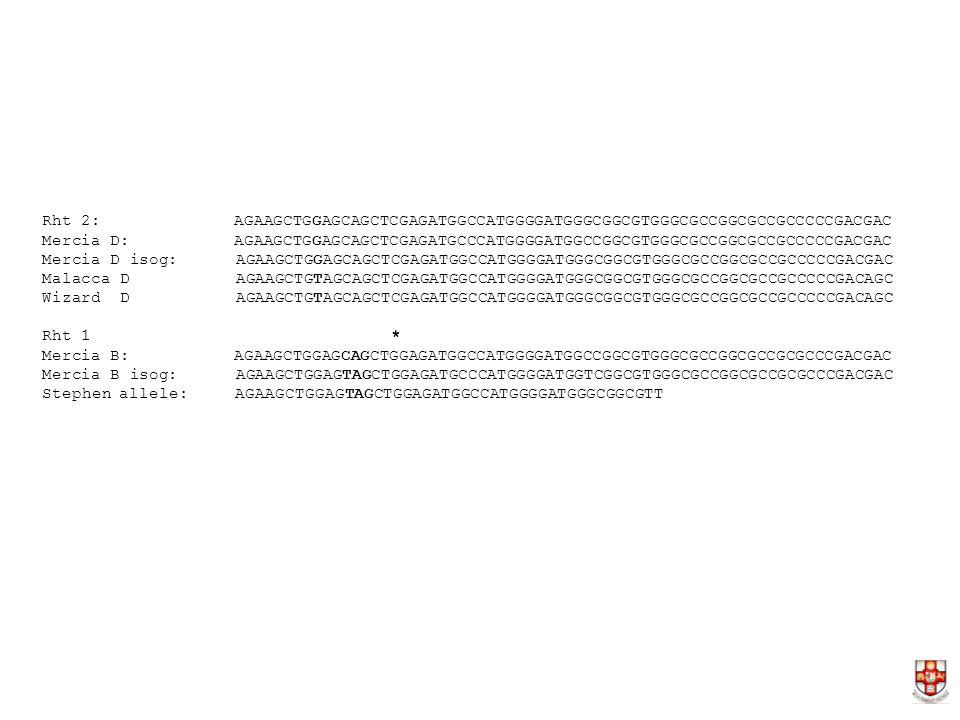 Rht 2: AGAAGCTGGAGCAGCTCGAGATGGCCATGGGGATGGGCGGCGTGGGCGCCGGCGCCGCCCCCGACGAC Mercia D:AGAAGCTGGAGCAGCTCGAGATGCCCATGGGGATGGCCGGCGTGGGCGCCGGCGCCGCCCCCGACGAC Mercia D isog: AGAAGCTGGAGCAGCTCGAGATGGCCATGGGGATGGGCGGCGTGGGCGCCGGCGCCGCCCCCGACGAC Malacca D AGAAGCTGTAGCAGCTCGAGATGGCCATGGGGATGGGCGGCGTGGGCGCCGGCGCCGCCCCCGACAGC Wizard D AGAAGCTGTAGCAGCTCGAGATGGCCATGGGGATGGGCGGCGTGGGCGCCGGCGCCGCCCCCGACAGC Rht 1 * Mercia B:AGAAGCTGGAGCAGCTGGAGATGGCCATGGGGATGGCCGGCGTGGGCGCCGGCGCCGCGCCCGACGAC Mercia B isog: AGAAGCTGGAGTAGCTGGAGATGCCCATGGGGATGGTCGGCGTGGGCGCCGGCGCCGCGCCCGACGAC Stephen allele: AGAAGCTGGAGTAGCTGGAGATGGCCATGGGGATGGGCGGCGTT