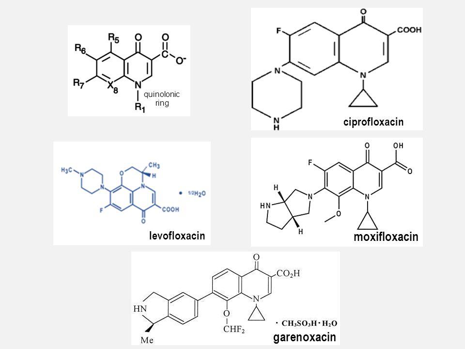 quinolonic ring levofloxacin ciprofloxacin moxifloxacin garenoxacin