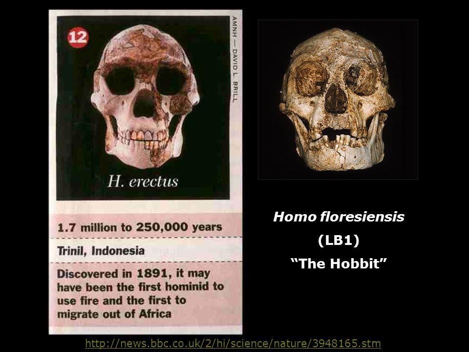"http://news.bbc.co.uk/2/hi/science/nature/3948165.stm Homo floresiensis (LB1) ""The Hobbit"""