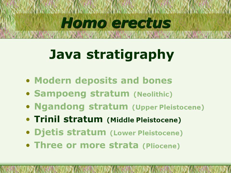 Homo erectus Modern deposits and bones Sampoeng stratum (Neolithic) Ngandong stratum (Upper Pleistocene) Trinil stratum (Middle Pleistocene) Djetis st