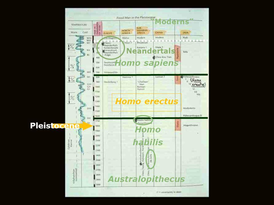 "Australopithecus Homo habilis Homo erectus Homo sapiens Neandertals ""Moderns"" Pleistocene"