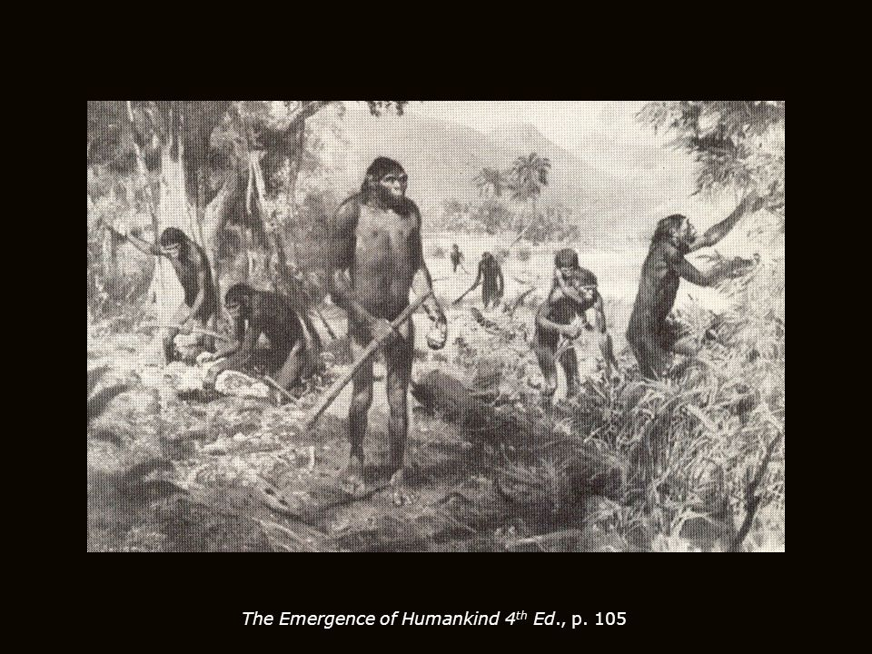 The Emergence of Humankind 4 th Ed., p. 105