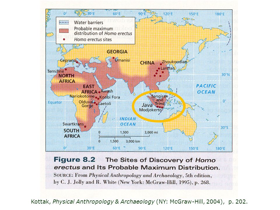 Kottak, Physical Anthropology & Archaeology (NY: McGraw-Hill, 2004), p. 202.