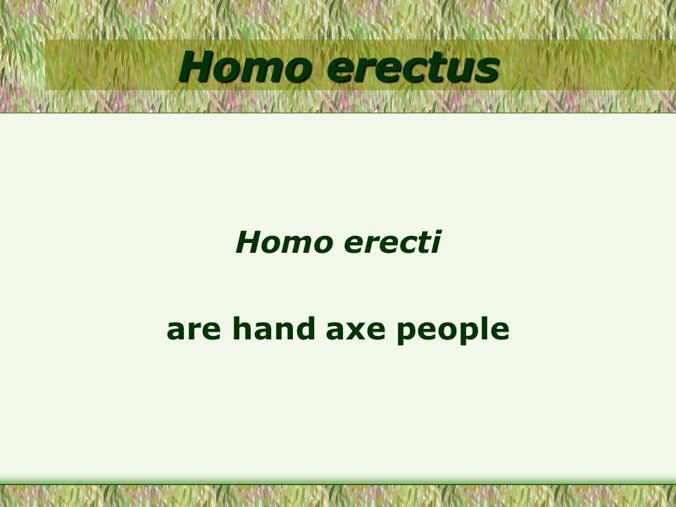 Homo erectus Homo erecti are hand axe people