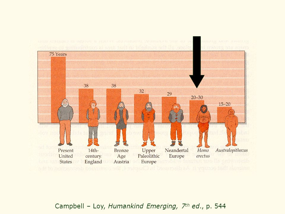 Campbell – Loy, Humankind Emerging, 7 th ed., p. 544