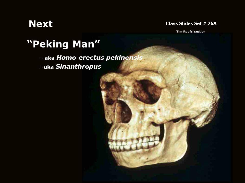 """""""Peking Man"""" – aka Homo erectus pekinensis – aka Sinanthropus Class Slides Set # 26A Tim Roufs' section Next"""