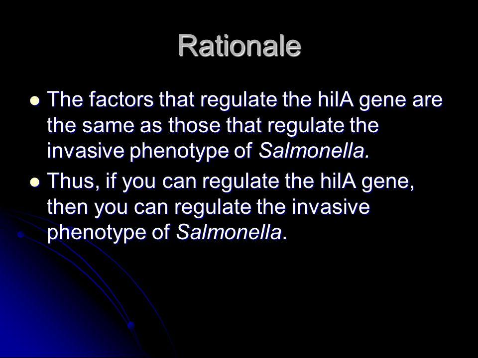 Explanation Repressing the hilA gene will also repress the invasive phenotype of Salmonella.