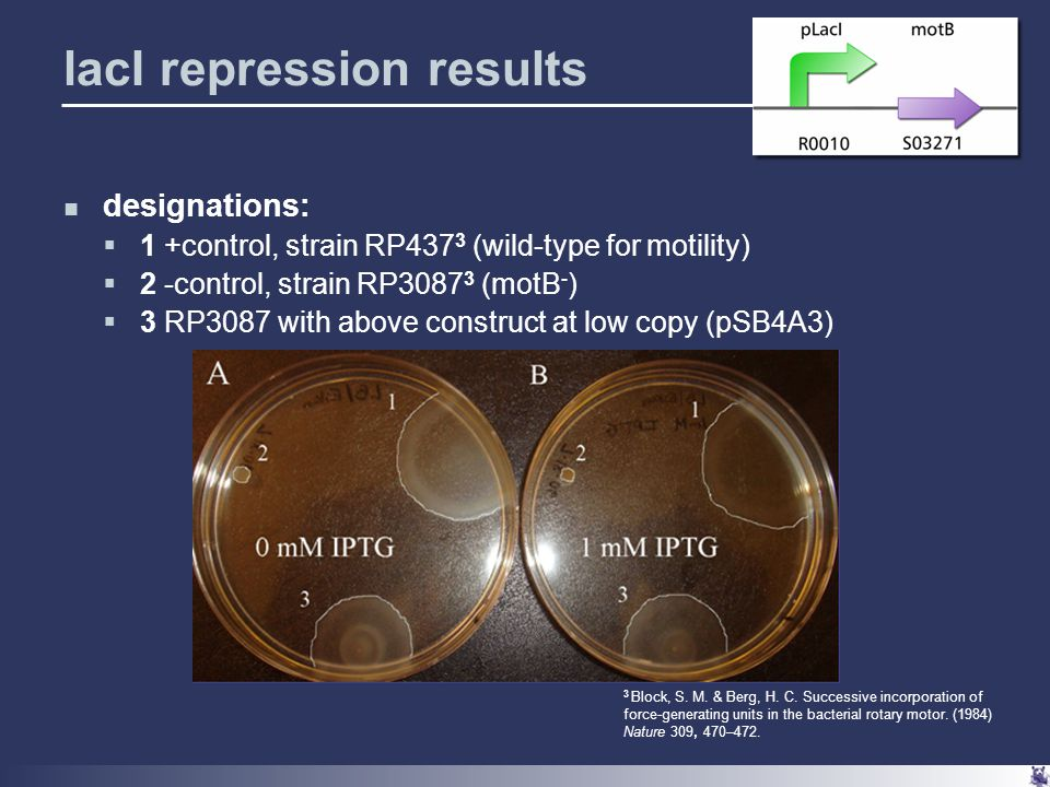 lacI repression results designations:  1 +control, strain RP437 3 (wild-type for motility)  2 -control, strain RP3087 3 (motB - )  3 RP3087 with above construct at low copy (pSB4A3) 3 Block, S.