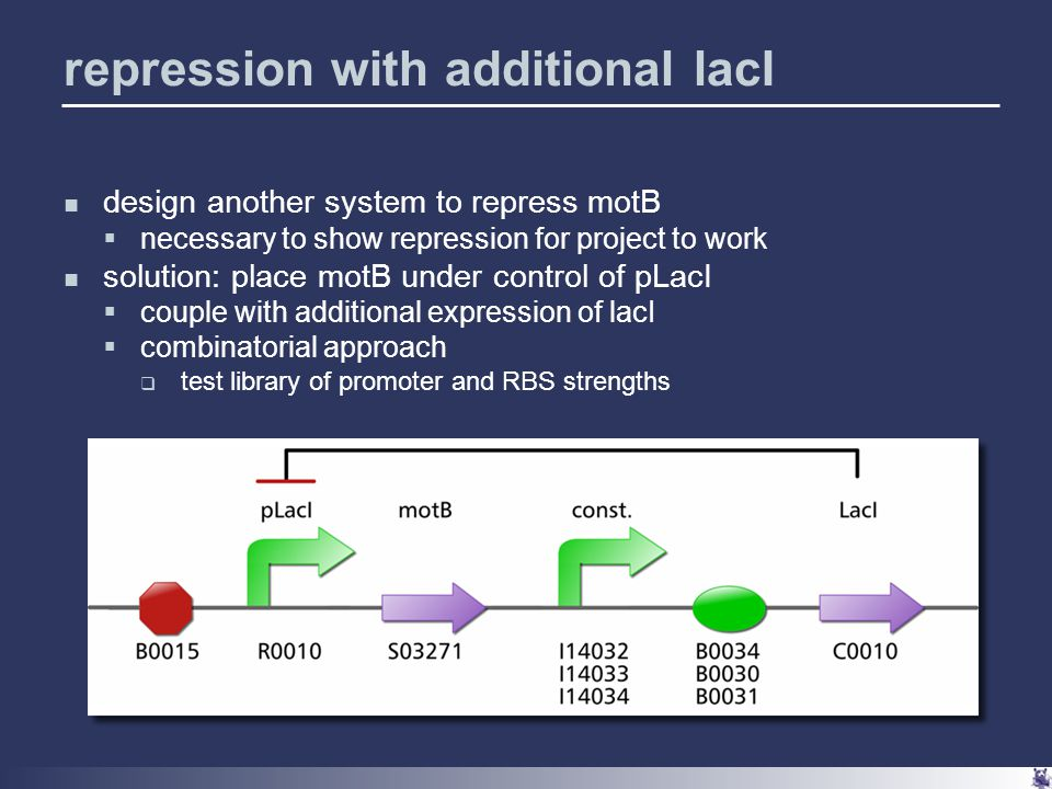 repression with additional lacI design another system to repress motB  necessary to show repression for project to work solution: place motB under control of pLacI  couple with additional expression of lacI  combinatorial approach  test library of promoter and RBS strengths