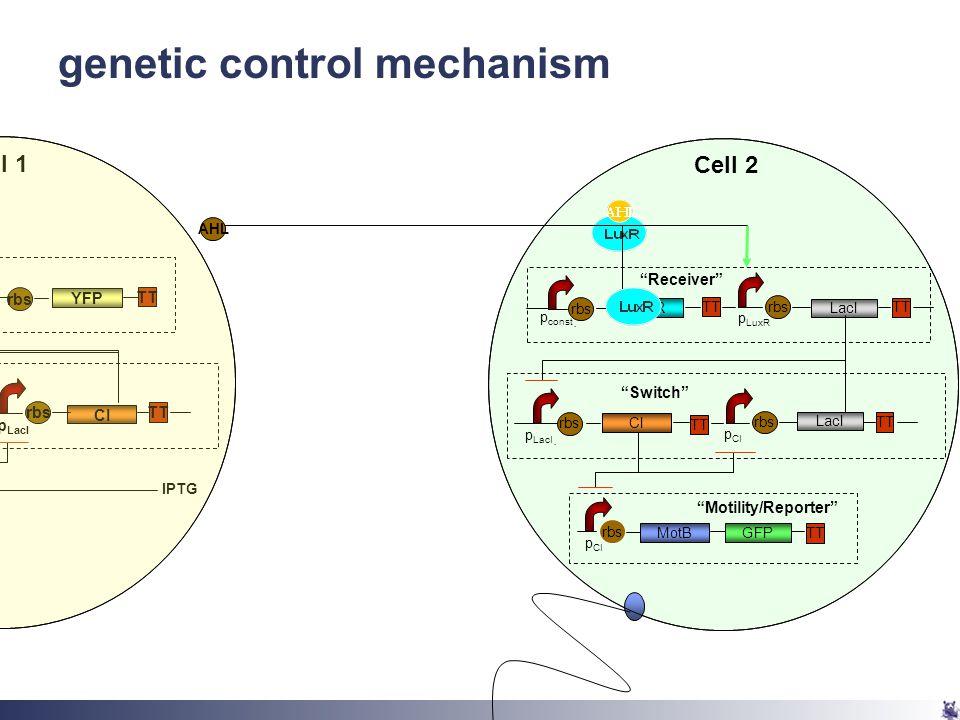 genetic control mechanism MotB rbs TT GFP p CI CI rbs TT LacI p LacI.