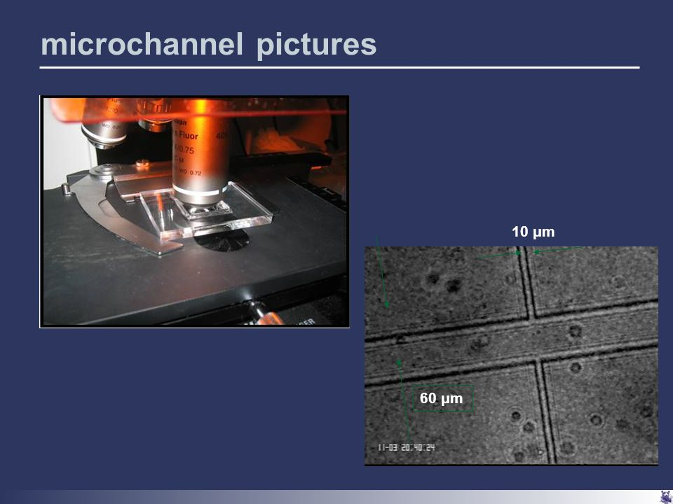 60 μm 10 μm microchannel pictures