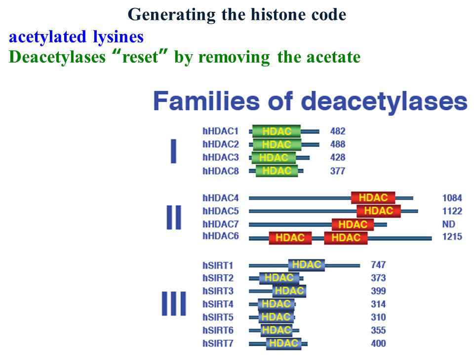 Generating the histone code acetylated lysines Deacetylases reset by removing the acetate