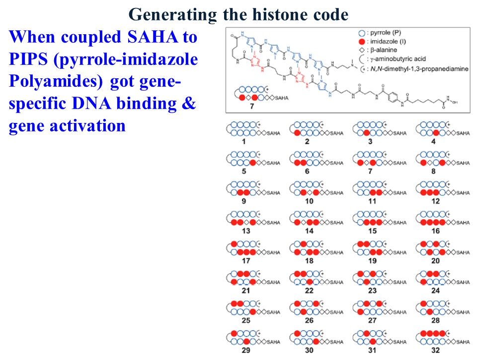 Generating the histone code When coupled SAHA to PIPS (pyrrole-imidazole Polyamides) got gene- specific DNA binding & gene activation