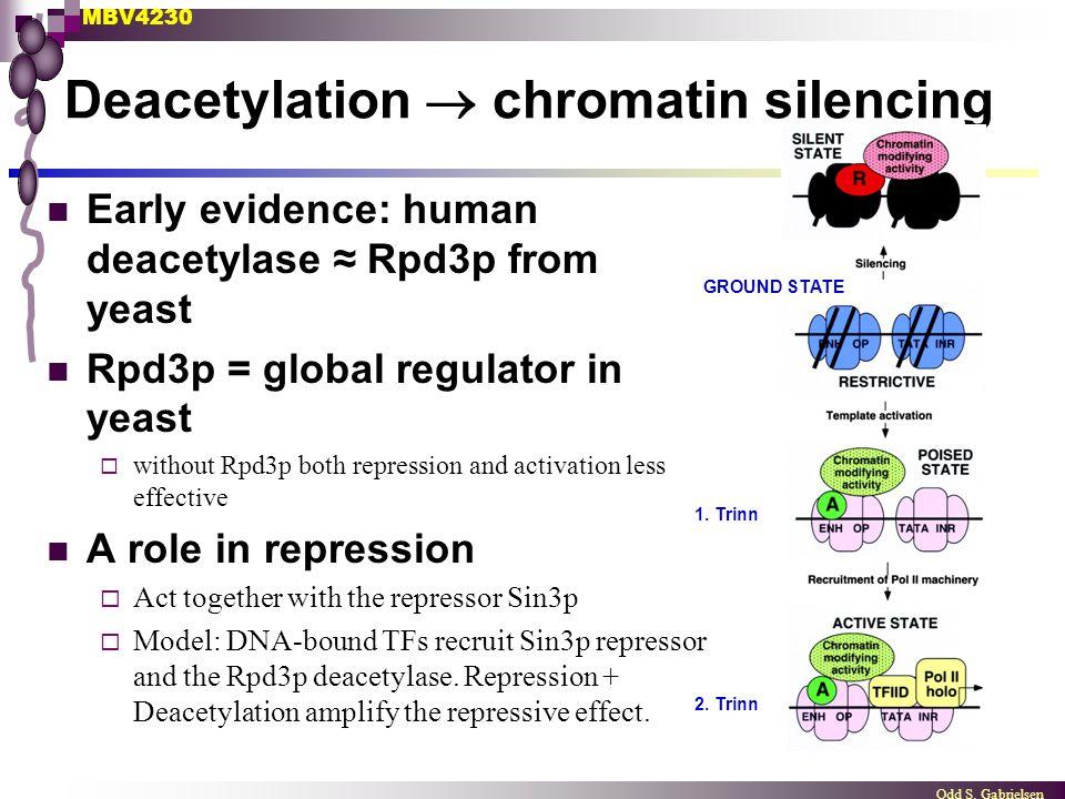 MBV4230 Odd S.Gabrielsen Deacetylation  chromatin silencing GROUND STATE 1.