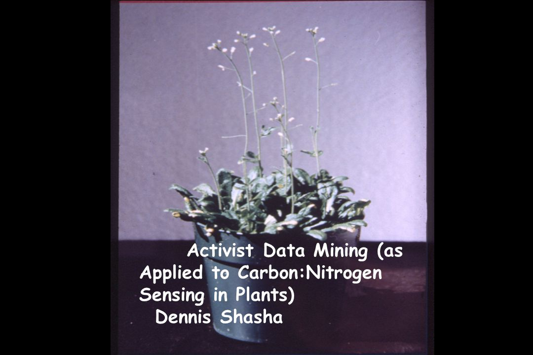 Activist Data Mining (as Applied to Carbon:Nitrogen Sensing in Plants) Dennis Shasha
