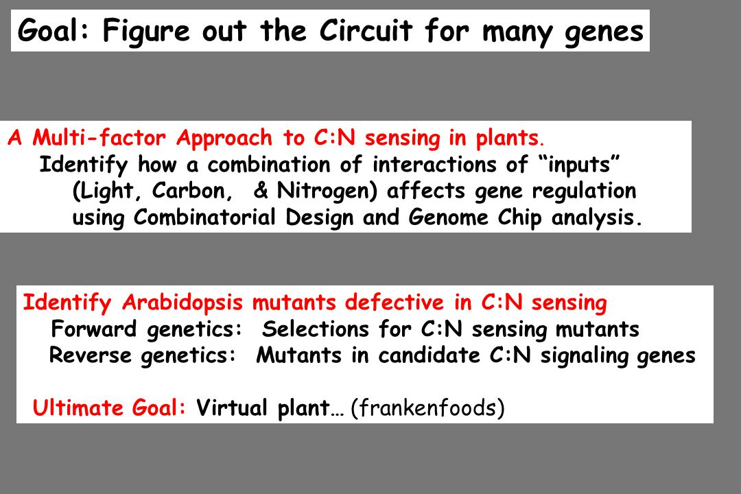 Goal: Figure out the Circuit for many genes Identify Arabidopsis mutants defective in C:N sensing Forward genetics: Selections for C:N sensing mutants