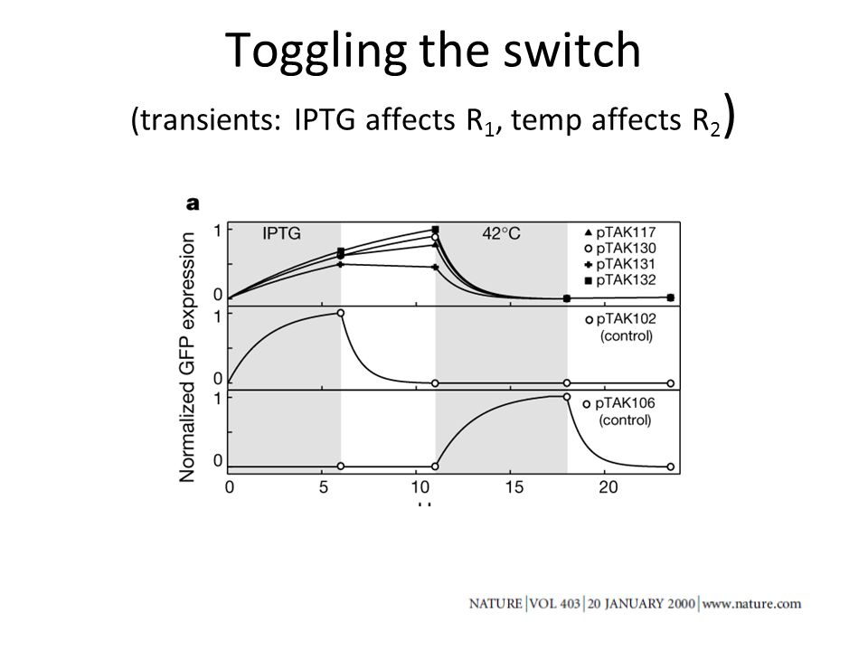 Toggling the switch (transients: IPTG affects R 1, temp affects R 2 )