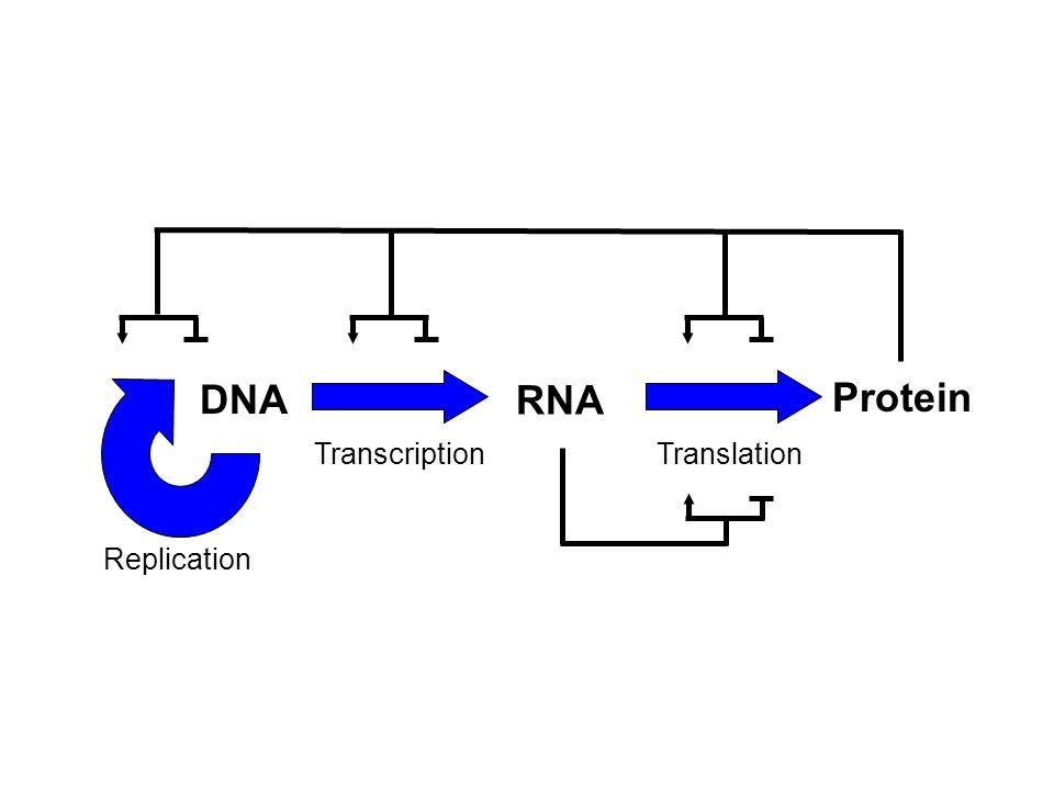 DNA Replication RNA Protein TranscriptionTranslation