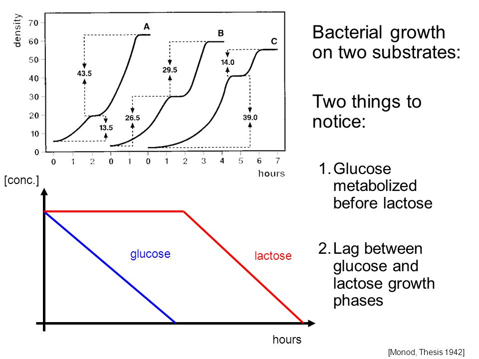 hours [conc.] glucose lactose Bacterial growth on two substrates: Two things to notice: 1.Glucose metabolized before lactose 2.Lag between glucose and