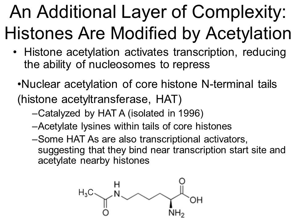 An Additional Layer of Complexity: Histones Are Modified by Acetylation Nuclear acetylation of core histone N-terminal tails (histone acetyltransferase, HAT) –Catalyzed by HAT A (isolated in 1996) –Acetylate lysines within tails of core histones –Some HAT As are also transcriptional activators, suggesting that they bind near transcription start site and acetylate nearby histones H3CH3C Histone acetylation activates transcription, reducing the ability of nucleosomes to repress