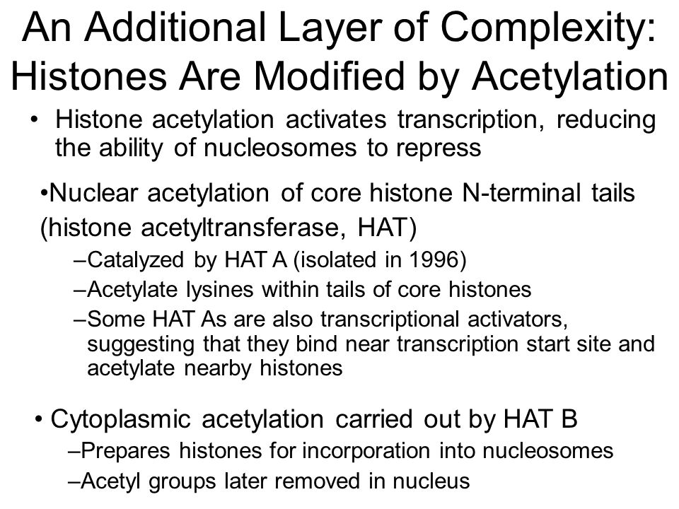 An Additional Layer of Complexity: Histones Are Modified by Acetylation Cytoplasmic acetylation carried out by HAT B –Prepares histones for incorporation into nucleosomes –Acetyl groups later removed in nucleus Nuclear acetylation of core histone N-terminal tails (histone acetyltransferase, HAT) –Catalyzed by HAT A (isolated in 1996) –Acetylate lysines within tails of core histones –Some HAT As are also transcriptional activators, suggesting that they bind near transcription start site and acetylate nearby histones Histone acetylation activates transcription, reducing the ability of nucleosomes to repress