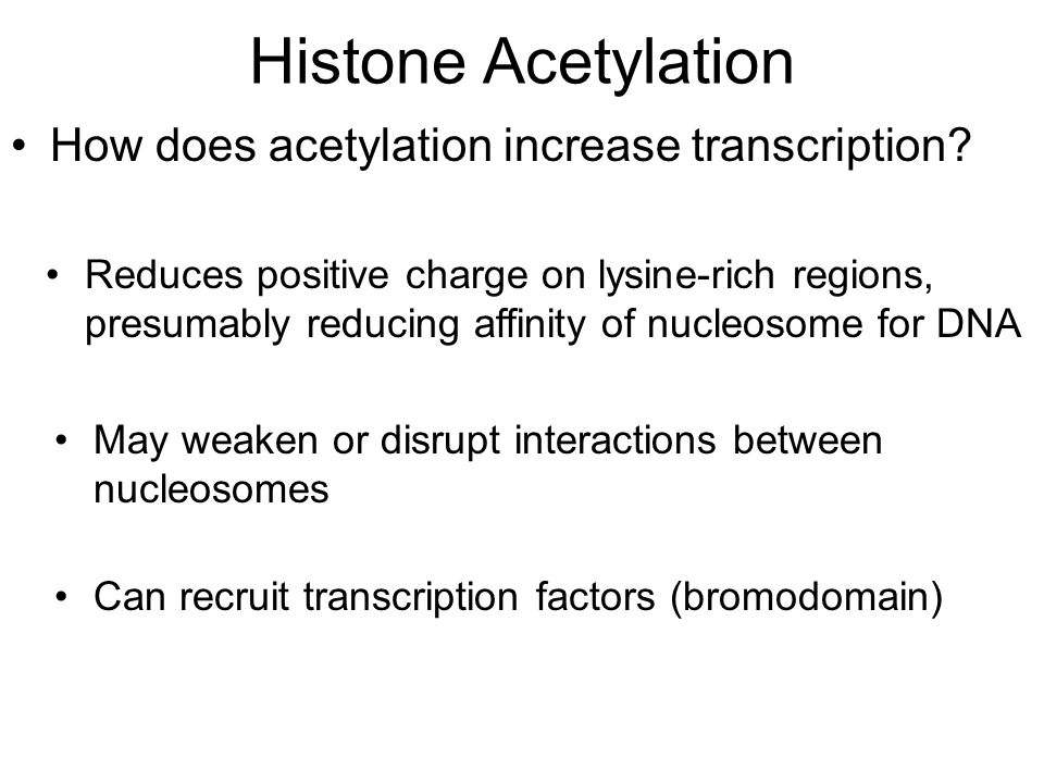 Histone Acetylation How does acetylation increase transcription.