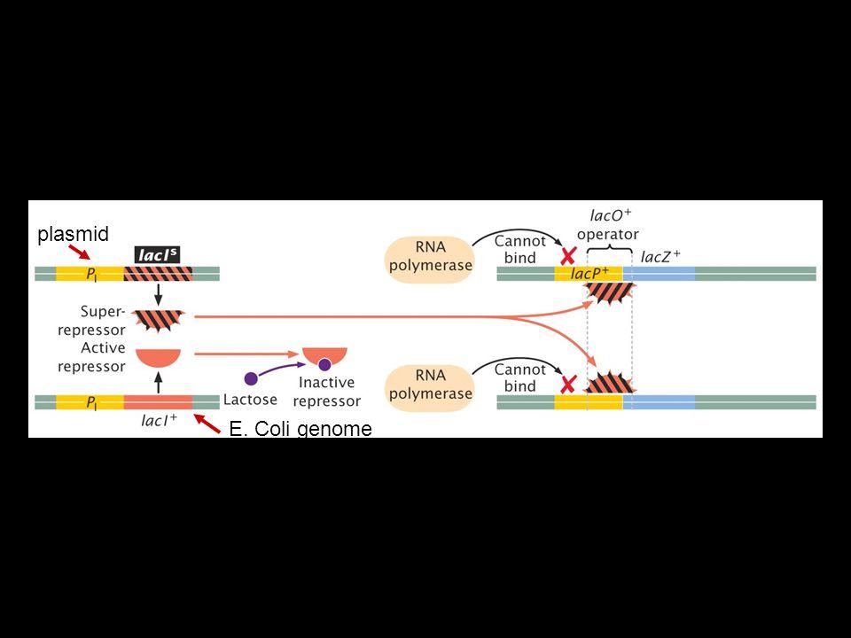 plasmid E. Coli genome