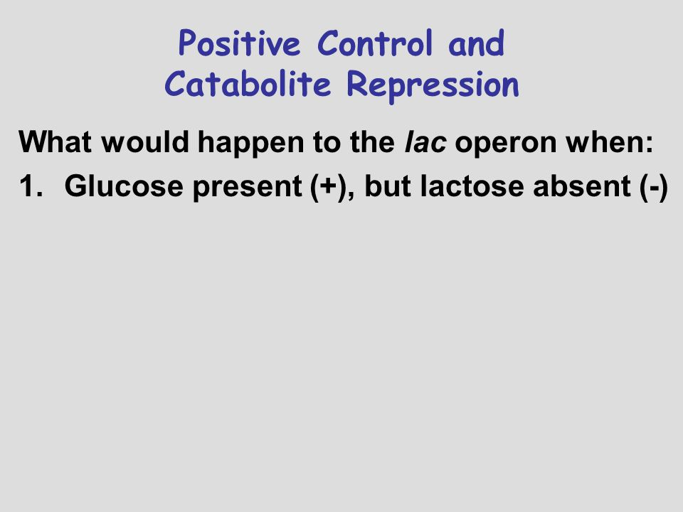 Positive Control and Catabolite Repression What would happen to the lac operon when: 1.Glucose present (+), but lactose absent (-)