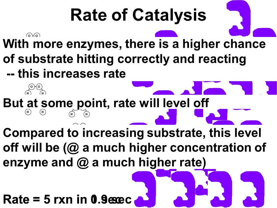 Rate of Catalysis Rate = 5 rxn in 1 secRate = 5 rxn in 0.9 sec With more enzymes, there is a higher chance of substrate hitting correctly and reacting