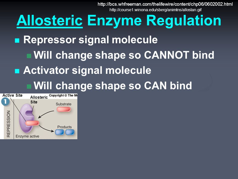 Allosteric Enzyme Regulation Repressor signal molecule Will change shape so CANNOT bind Activator signal molecule Will change shape so CAN bind Active