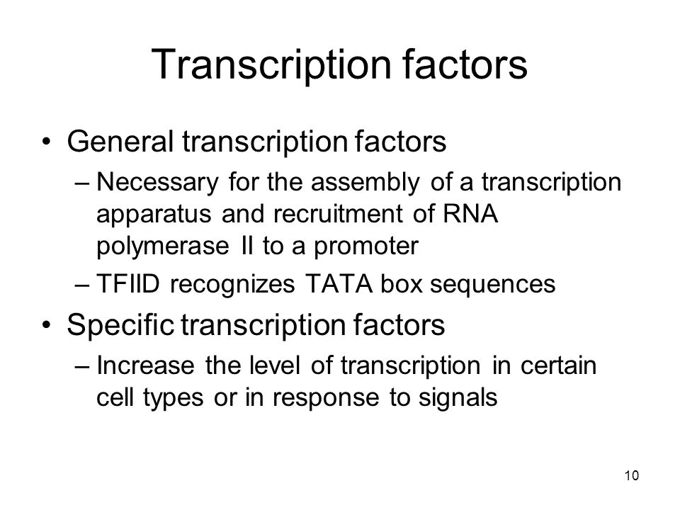 Transcription factors General transcription factors –Necessary for the assembly of a transcription apparatus and recruitment of RNA polymerase II to a