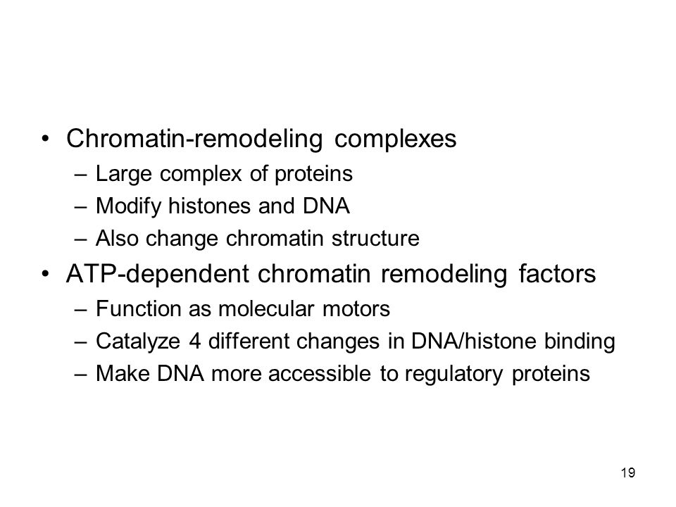 Chromatin-remodeling complexes –Large complex of proteins –Modify histones and DNA –Also change chromatin structure ATP-dependent chromatin remodeling