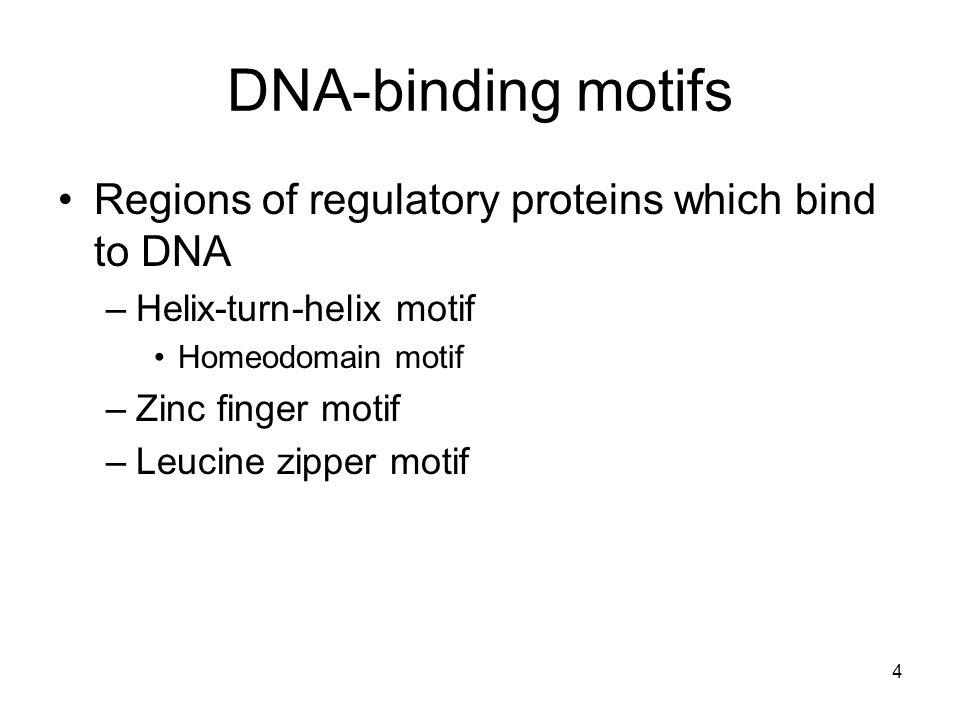 4 DNA-binding motifs Regions of regulatory proteins which bind to DNA –Helix-turn-helix motif Homeodomain motif –Zinc finger motif –Leucine zipper mot