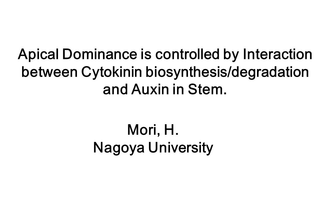Apical Dominance is controlled by Interaction between Cytokinin biosynthesis/degradation and Auxin in Stem. Mori, H. Nagoya University
