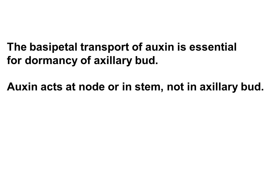 The basipetal transport of auxin is essential for dormancy of axillary bud. Auxin acts at node or in stem, not in axillary bud.