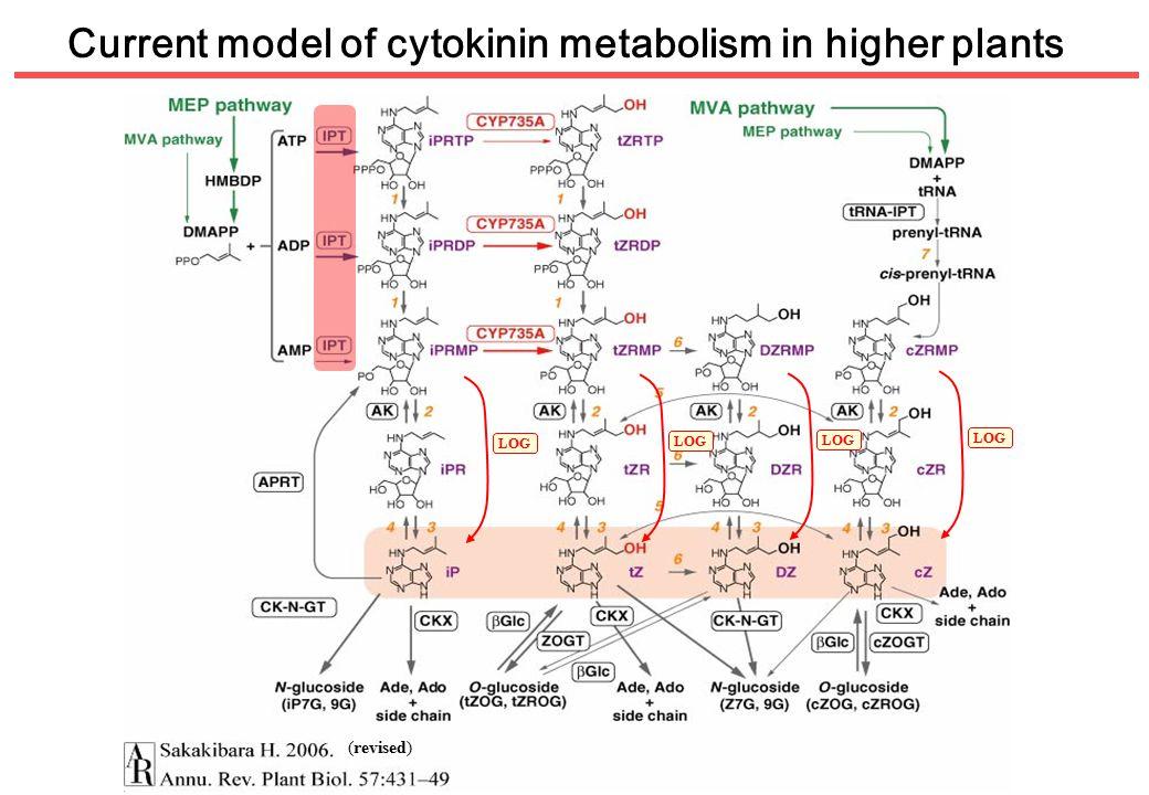 Current model of cytokinin metabolism in higher plants LOG (revised) LOG