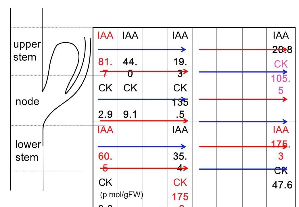 IAA 81. 7 CK 2.9 IAA 44. 0 CK 9.1 IAA 19. 3 CK 135.5 IAA 20.8 CK 105. 5 IAA 60. 5 CK 3.6 IAA 35. 4 CK 175.2 IAA 175. 3 CK 47.6 IAA 79. 5 CK 1.9 IAA 50