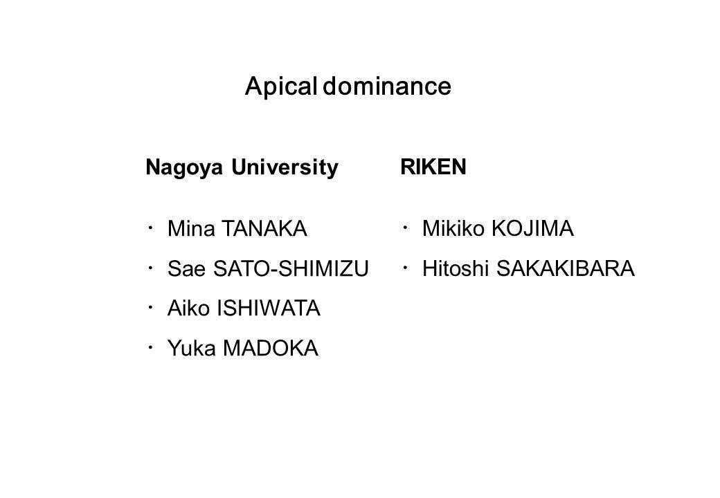 Apical dominance Nagoya University ・ Mina TANAKA ・ Sae SATO-SHIMIZU ・ Aiko ISHIWATA ・ Yuka MADOKA RIKEN ・ Mikiko KOJIMA ・ Hitoshi SAKAKIBARA