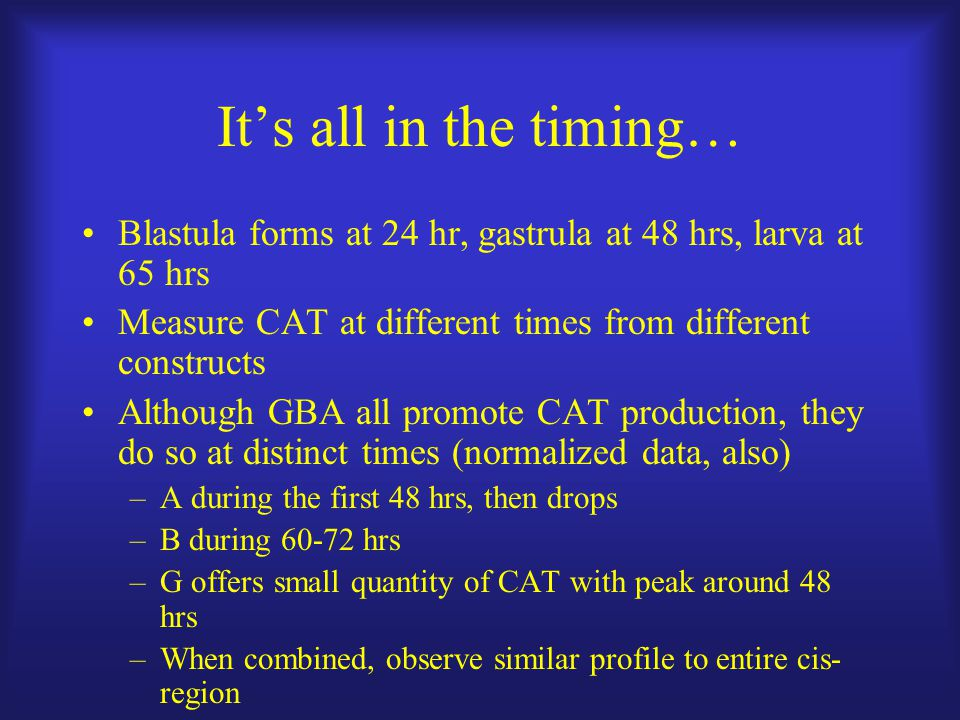 It's all in the timing… Blastula forms at 24 hr, gastrula at 48 hrs, larva at 65 hrs Measure CAT at different times from different constructs Although GBA all promote CAT production, they do so at distinct times (normalized data, also) –A during the first 48 hrs, then drops –B during 60-72 hrs –G offers small quantity of CAT with peak around 48 hrs –When combined, observe similar profile to entire cis- region