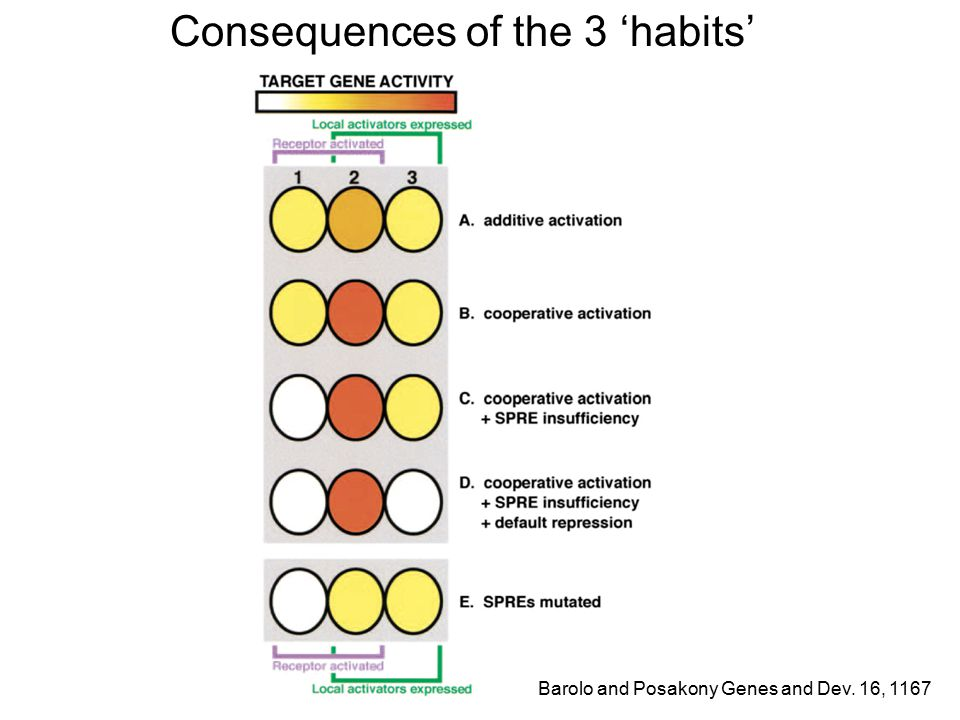 Consequences of the 3 'habits' Barolo and Posakony Genes and Dev. 16, 1167