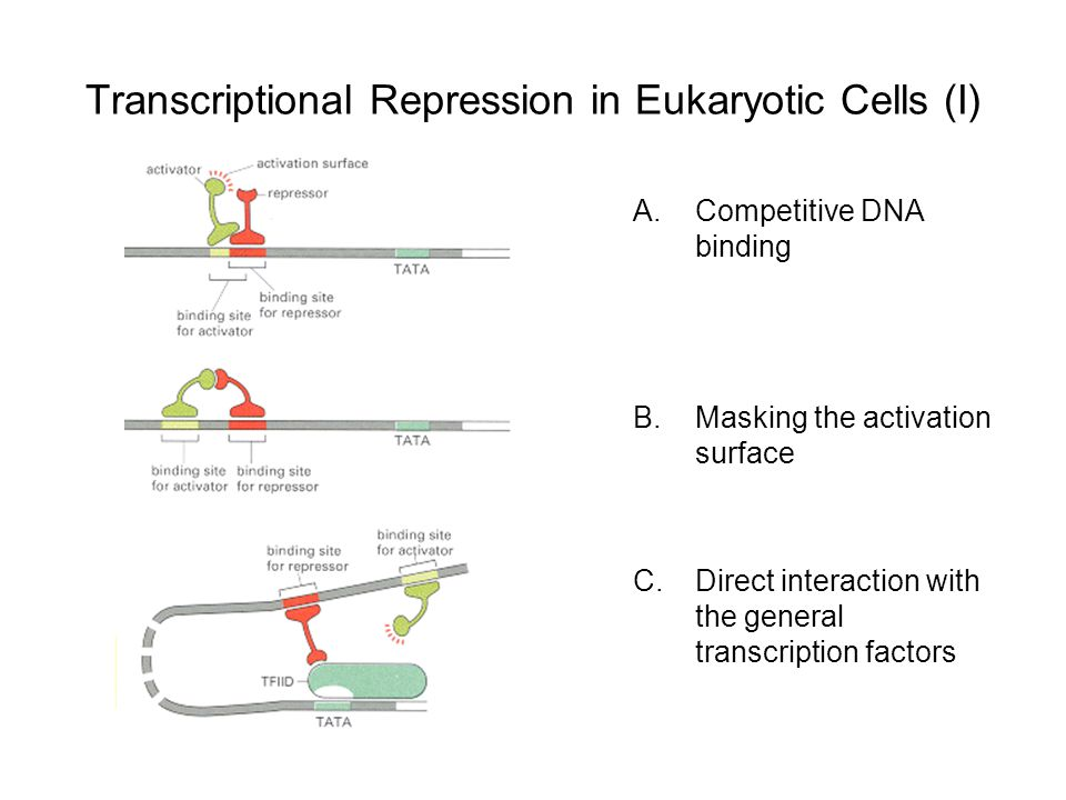 Transcriptional Repression in Eukaryotic Cells (I) A.Competitive DNA binding B.Masking the activation surface C.Direct interaction with the general transcription factors
