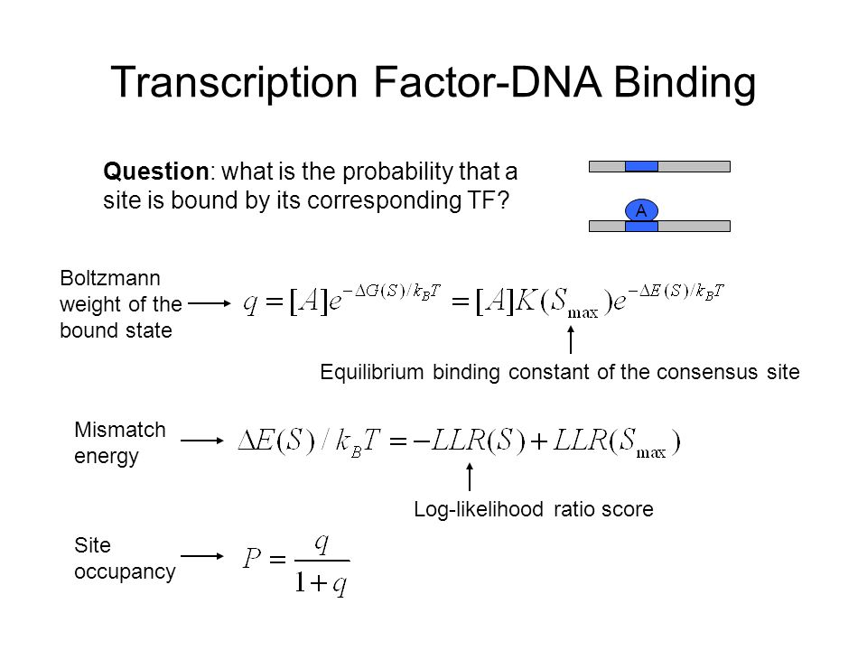 Transcription Factor-DNA Binding A Question: what is the probability that a site is bound by its corresponding TF.
