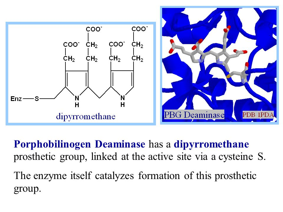 Porphobilinogen Deaminase has a dipyrromethane prosthetic group, linked at the active site via a cysteine S.