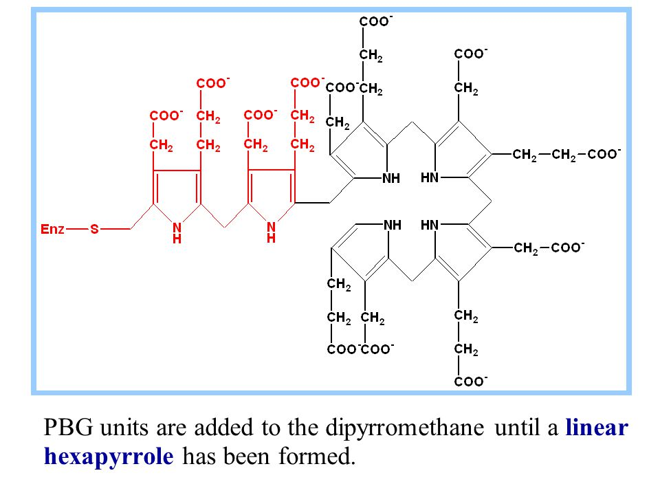 PBG units are added to the dipyrromethane until a linear hexapyrrole has been formed.