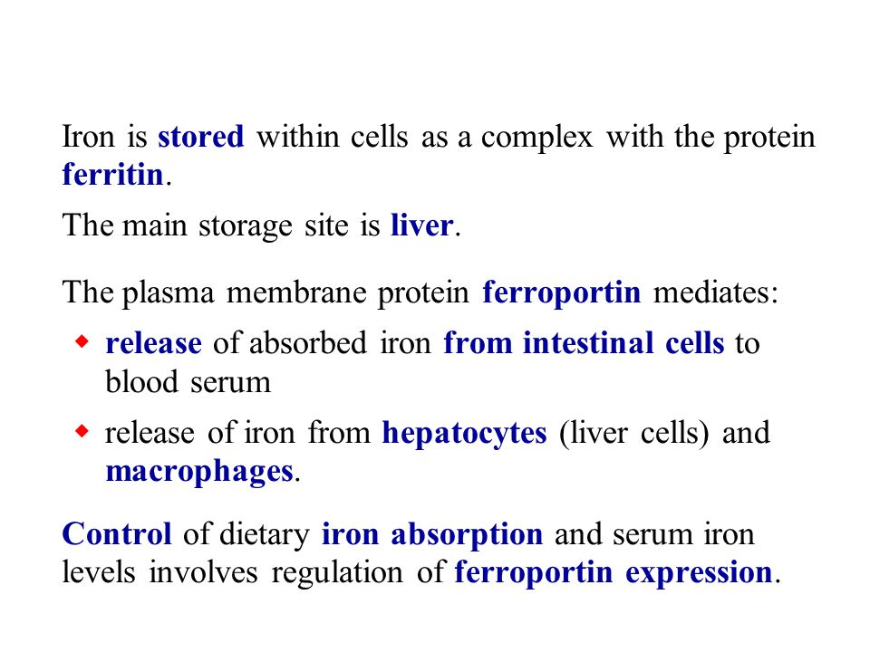 Iron is stored within cells as a complex with the protein ferritin.