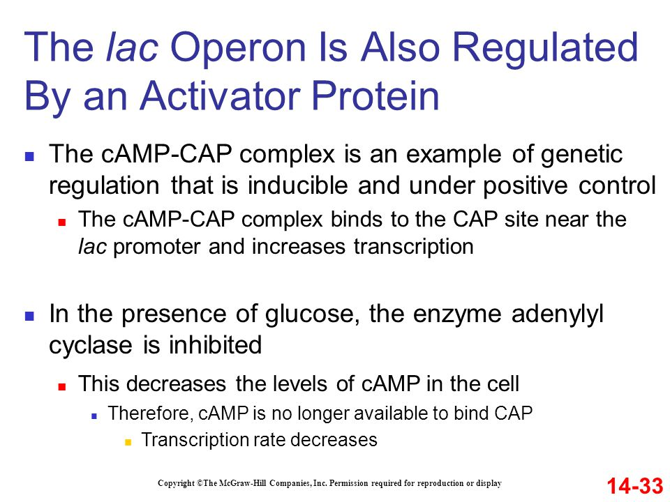 Copyright ©The McGraw-Hill Companies, Inc. Permission required for reproduction or display The cAMP-CAP complex is an example of genetic regulation th