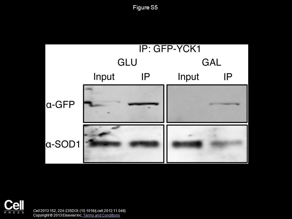 Figure S5 Cell 2013 152, 224-235DOI: (10.1016/j.cell.2012.11.046) Copyright © 2013 Elsevier Inc.