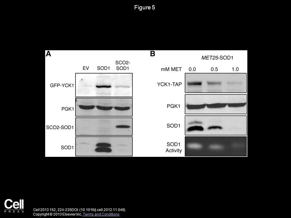 Figure 5 Cell 2013 152, 224-235DOI: (10.1016/j.cell.2012.11.046) Copyright © 2013 Elsevier Inc.