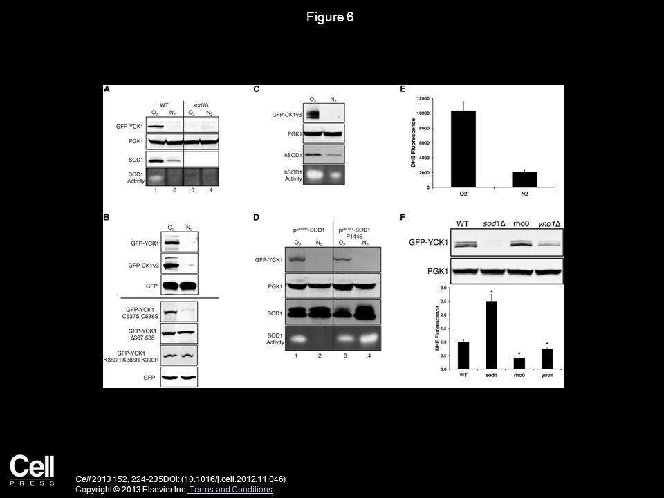 Figure 6 Cell 2013 152, 224-235DOI: (10.1016/j.cell.2012.11.046) Copyright © 2013 Elsevier Inc.