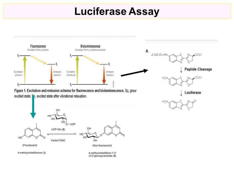 Luciferase Assay